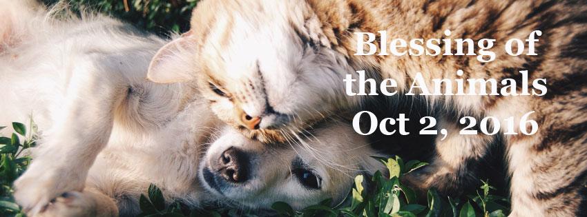 2016-animal-blessings